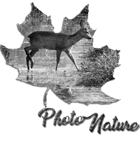 photonature Index du Forum