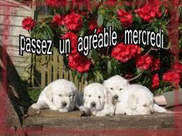 Bonjour bonsoir,...blabla Decembre 2013 - Page 37 38---chien-mercredi-47a8b77