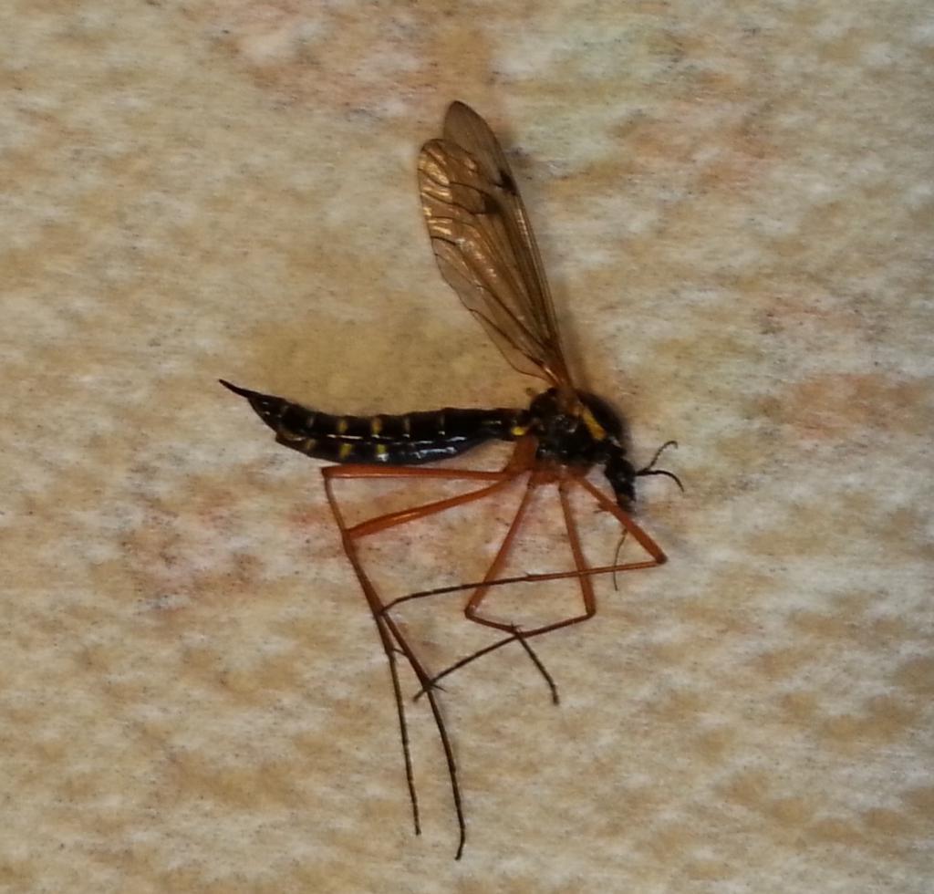 Insecte Salle De Bain Volant ~ insectes du bois insecte volant maison apsip com