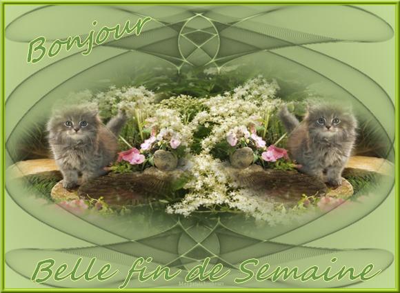 Bonjour du mois d'Avril 2019  - Page 4 Chatonsve-5613d9b