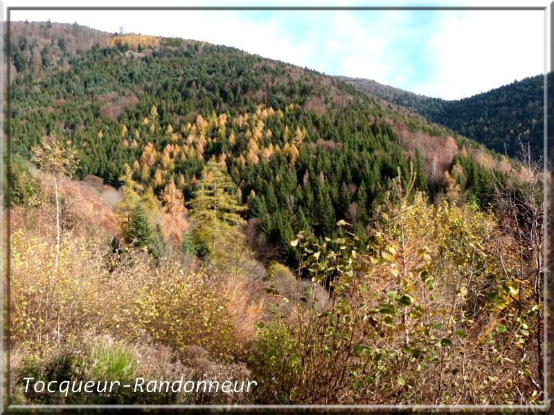 Couleurs d'automne Couleur-d-automne-121-489c79f