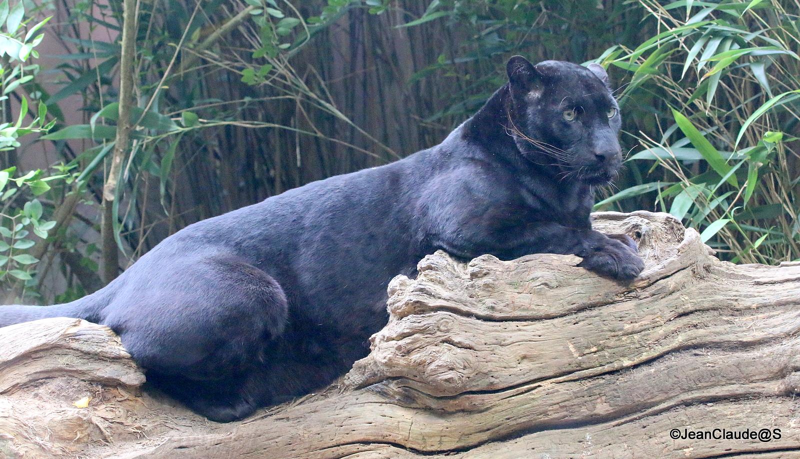 Zoo la Flèche Img_4177-5300f0a