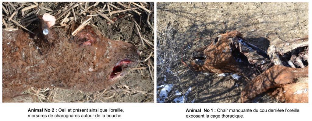 Mutilation 2015-2016 13.12.2015-colorado-07--4e2b807