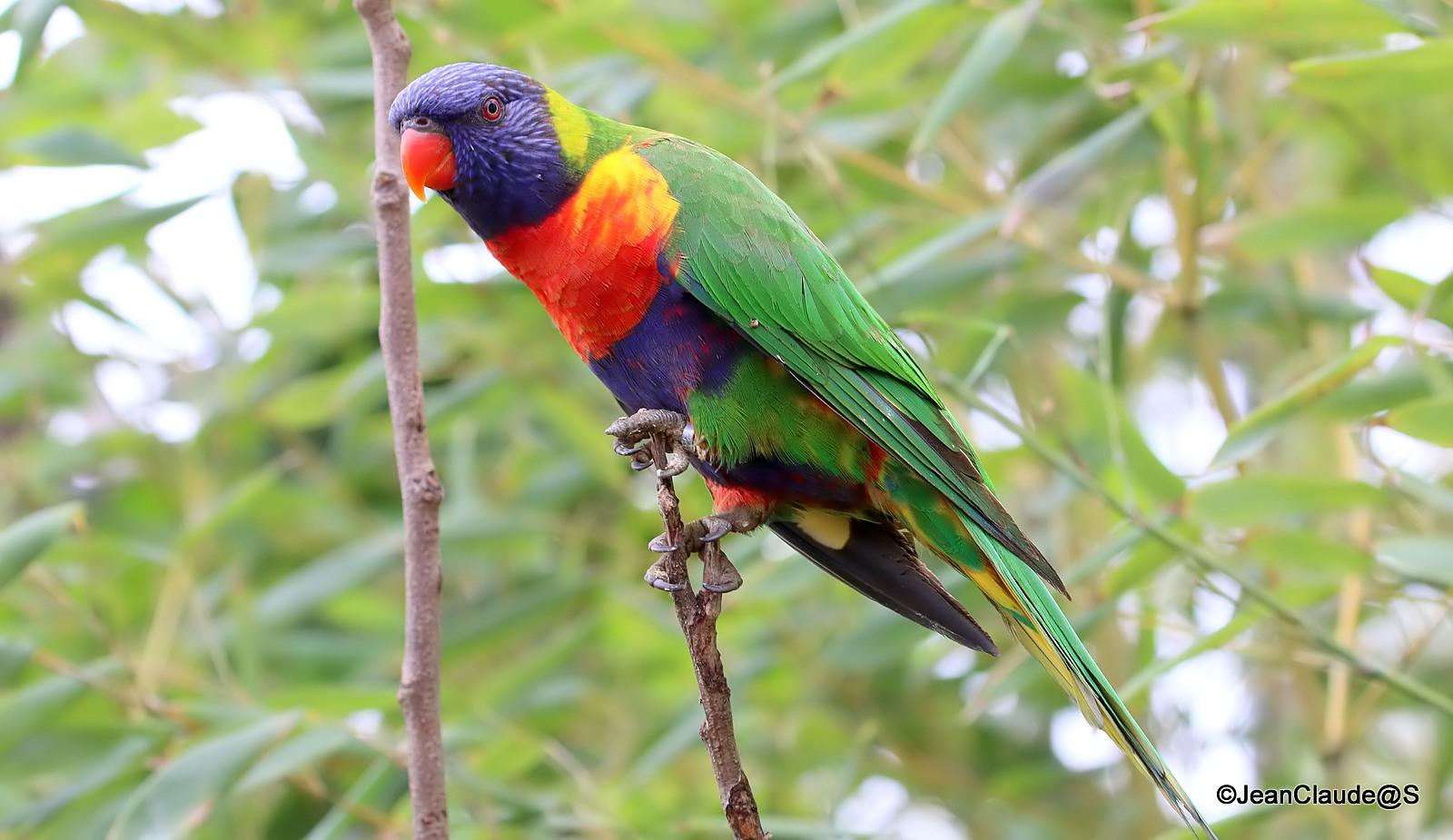 Zoo la Flèche Img_4035_filtered-5300ee1