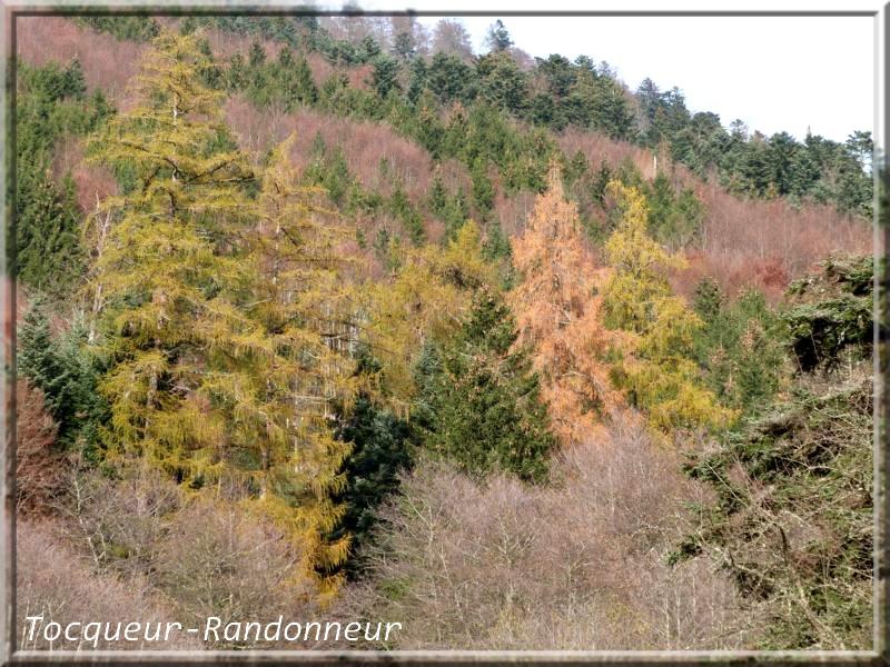 Couleurs d'automne Couleur-d-automne-111-489c781