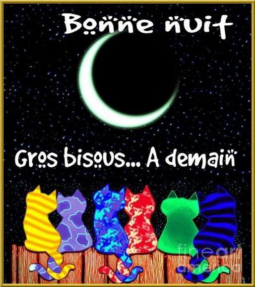 Bonne nuit du mois de Février 2019 - Page 2 Chatbnnu-550c29d