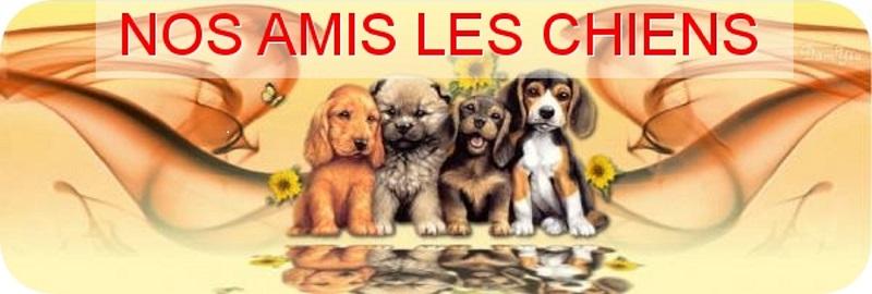 Nos amis les chiens Forum Index