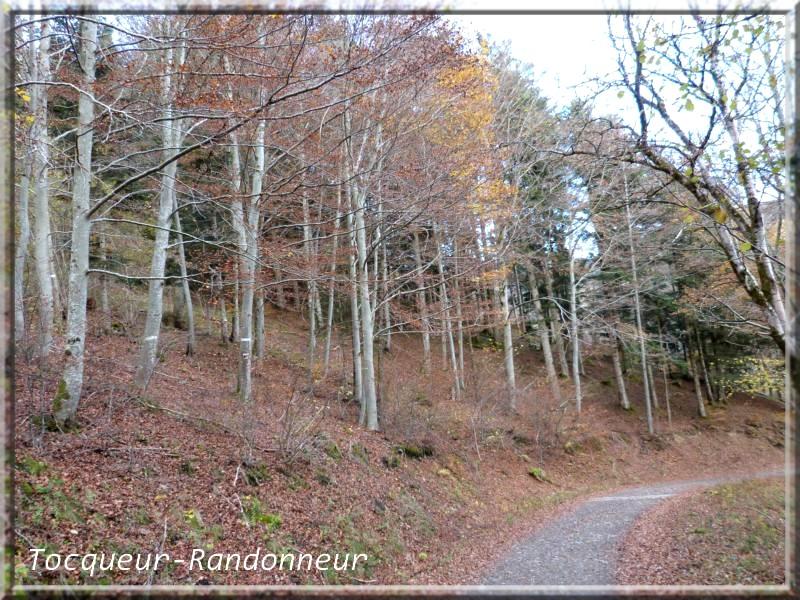 Couleurs d'automne Couleur-d-automne-155-489c7b8