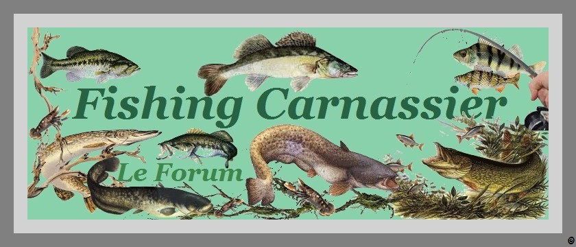 FISHING CARNASSIER Forum Index