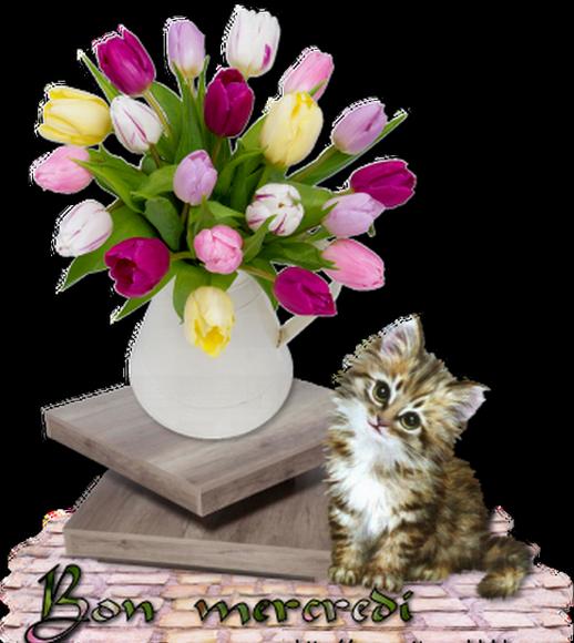 Bonjour du mois d'Avril 2019  - Page 3 Chatmercr-5611c1f