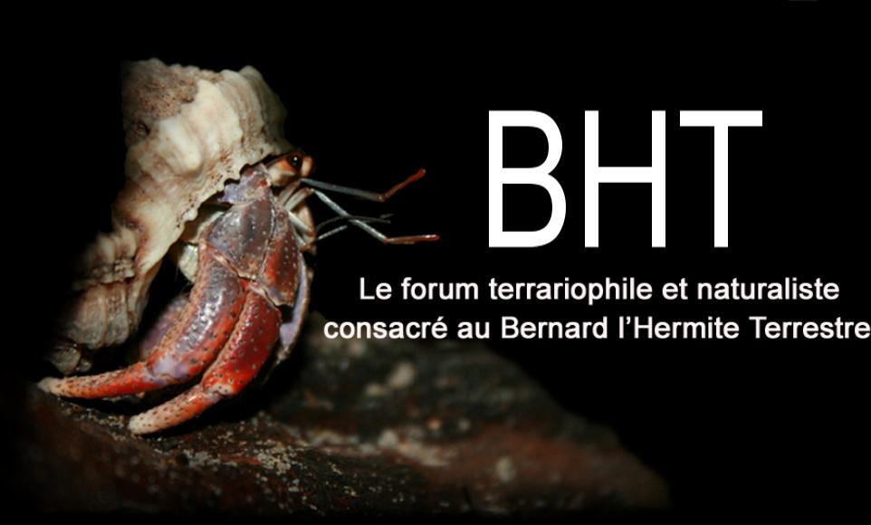 BHT : Le forum 100% bernard l'hermite terrestre (Coenobita sp.)  Forum Index