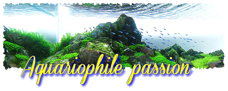 aquariophile passionés Index du Forum