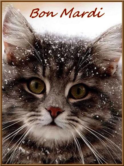 Les bonjour et bonne nuit du  1er janvier 2019 AU 1er Janvier 2020   - Page 2 Chatenei-5596b56
