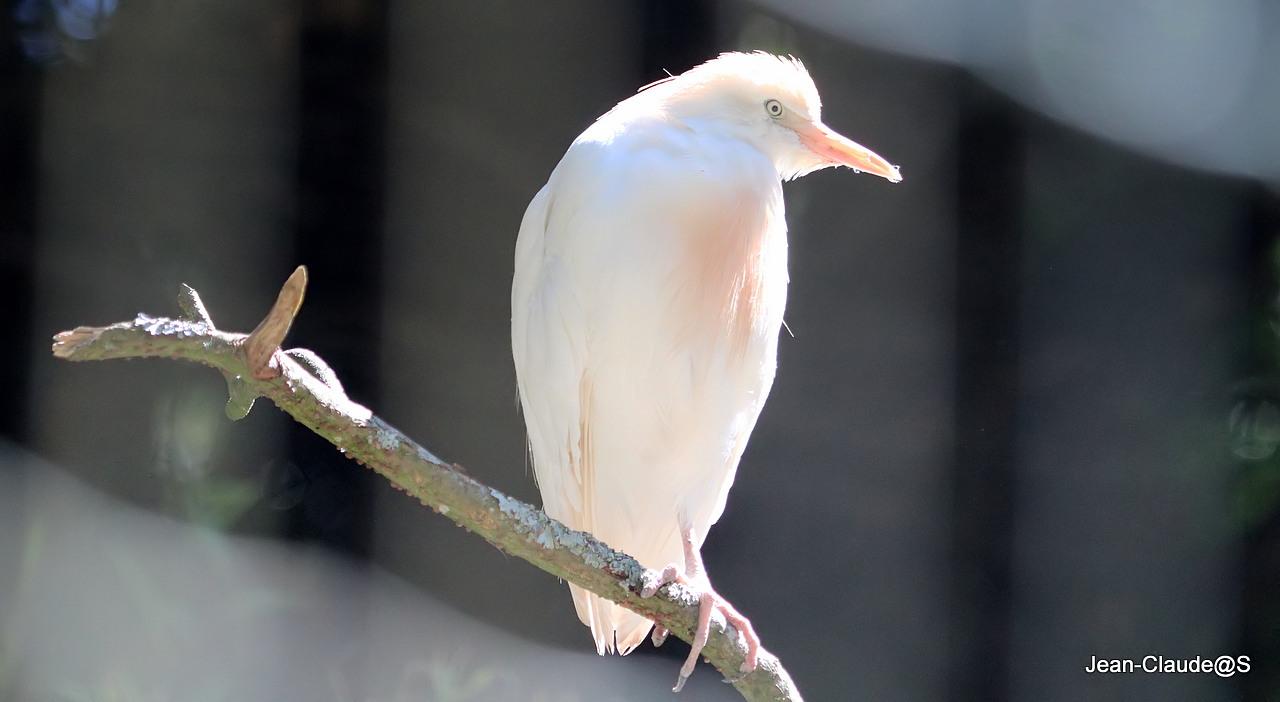Les oiseaux de la Ria d'Etel Img_2348_filtered-473db66