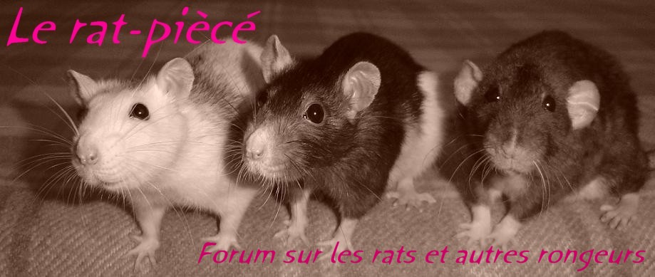 Le rat-piècé Index du Forum