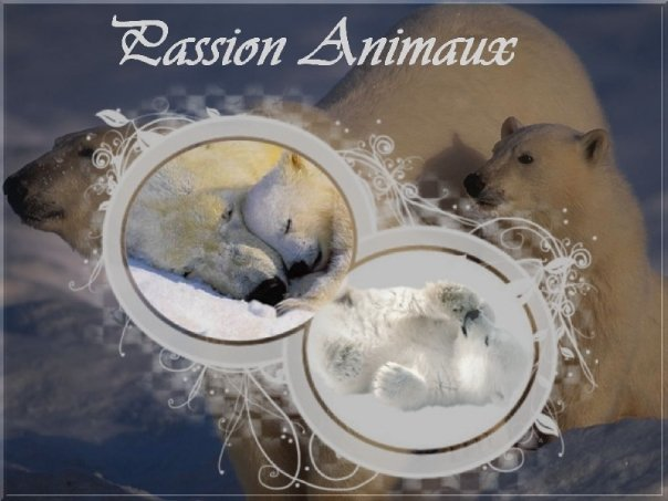 Passion Animaux Index du Forum