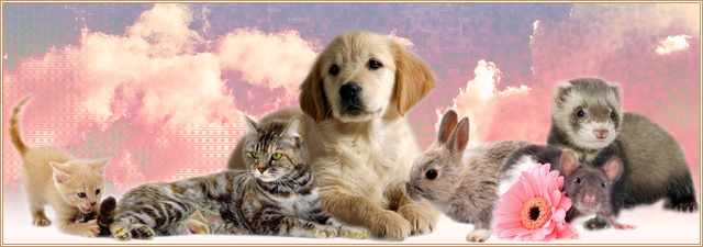nos amis les animaux  Index du Forum