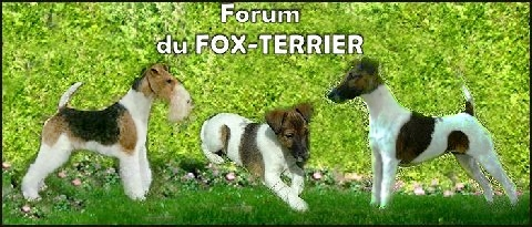 Forum du fox-terrier Index du Forum