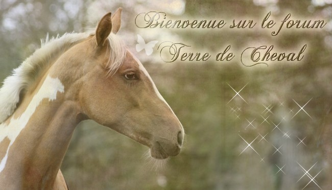 Terre de Cheval Forum Index