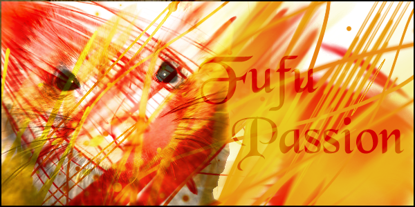 fufu-passion  Forum Index
