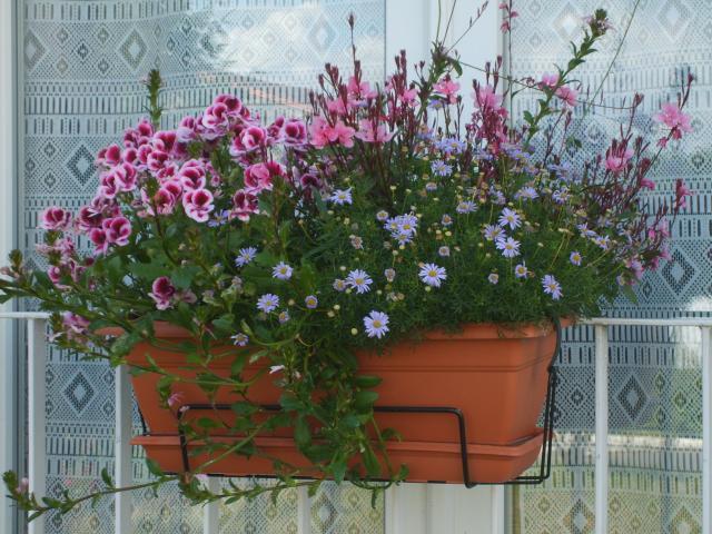 Url - Pourpier vivace en jardiniere ...
