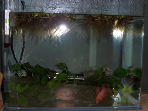 Club d 39 aquariophilie de st amand les eaux betta for Grand bac a poisson