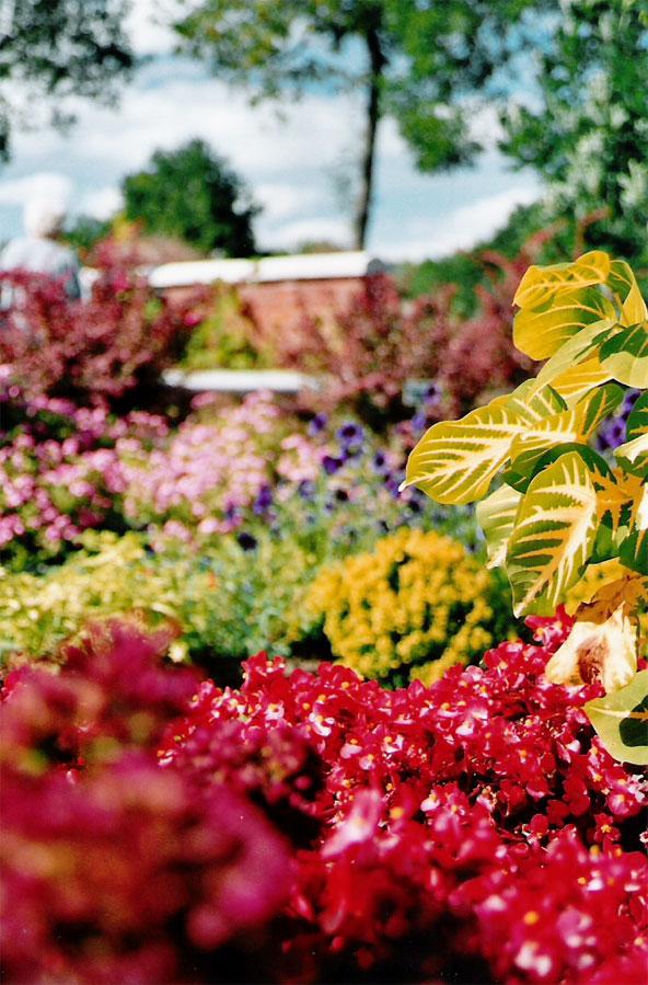 Passions et partage le jardin botanique for Boulevard du jardin botanique 32