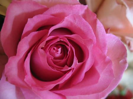 passions et partage fleurs au nom de la fleur. Black Bedroom Furniture Sets. Home Design Ideas