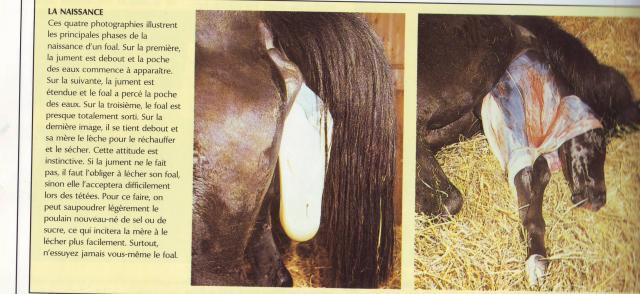 le pin creux tout savoir sur les chevaux. Black Bedroom Furniture Sets. Home Design Ideas