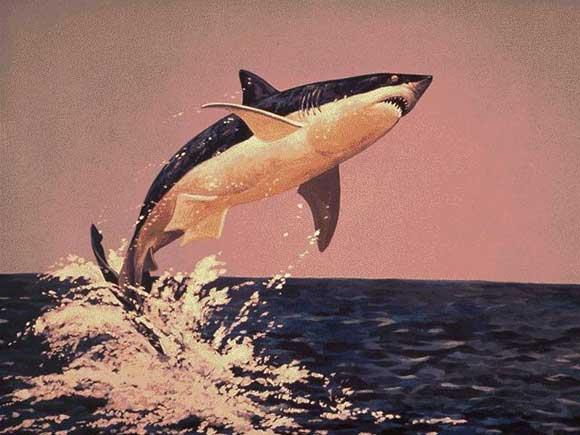 Passions et partage le requin generalit s - Comment dessiner une baleine ...
