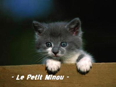 ~ Le Petit Minou ~ Index du Forum