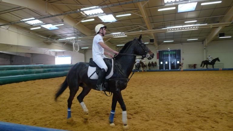 Le forum des border terriers salon du cheval equisud montpellier - Salon du cheval montpellier ...