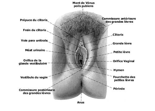 L'anatomie du sexe hentai