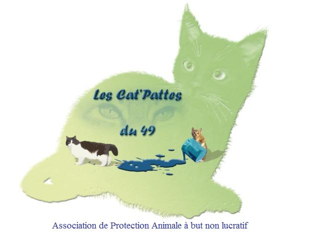 Les Cat'Pattes du 49 Index du Forum