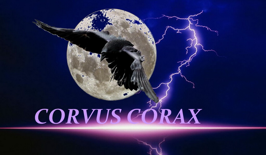 Corvus Corax Index du Forum
