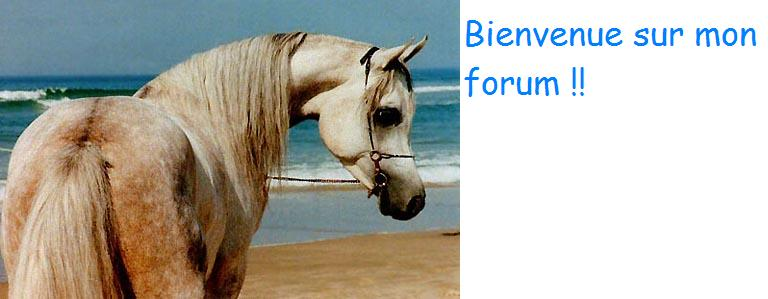 Les chevaux Forum Index
