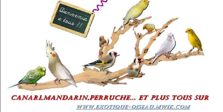 Exotique oiseau Index