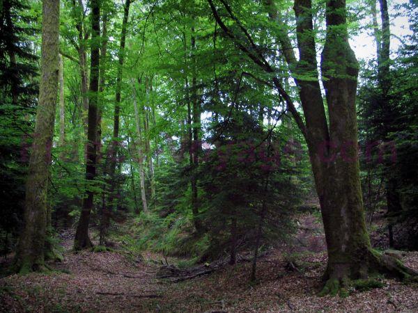 Un clic pour La Forêt Index du Forum
