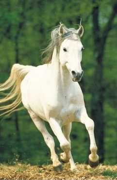 Les reines de saba un cheval au galop - Comment dessiner un cheval au galop ...
