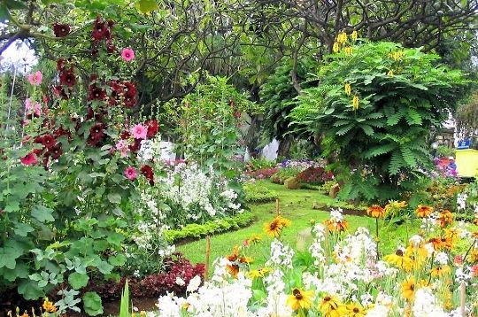 Passions et partage massifs et parterres floraux - Planter des roses tremieres ...