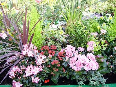 Forum chez albertine for Grande plante verte exterieur