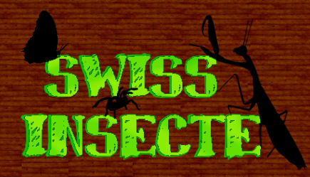 Swiss-insecte Forum Index