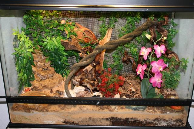 liane pour terrarium