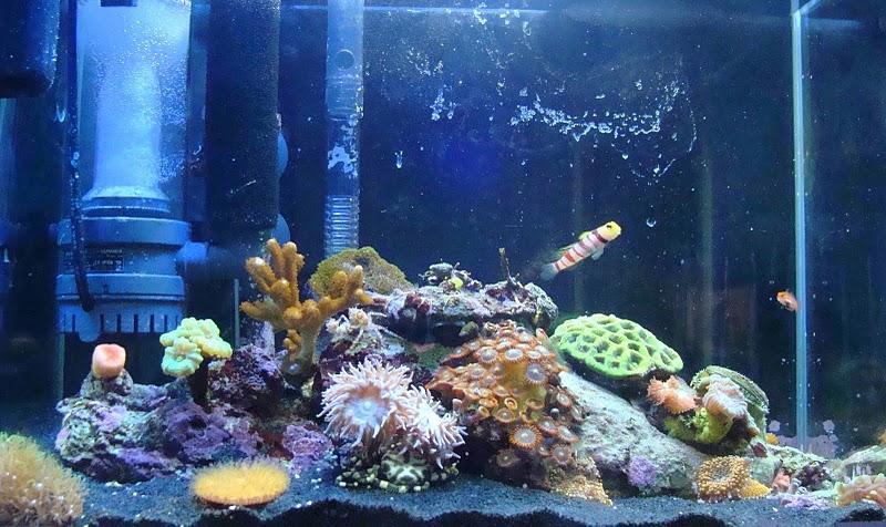 aquario philrecifal sable noir pour r cifal. Black Bedroom Furniture Sets. Home Design Ideas