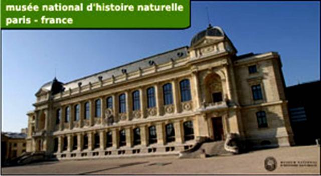 Dinochat mnhn museum national d 39 histoire naturelle de paris - Jardin des plantes paris dinosaures ...
