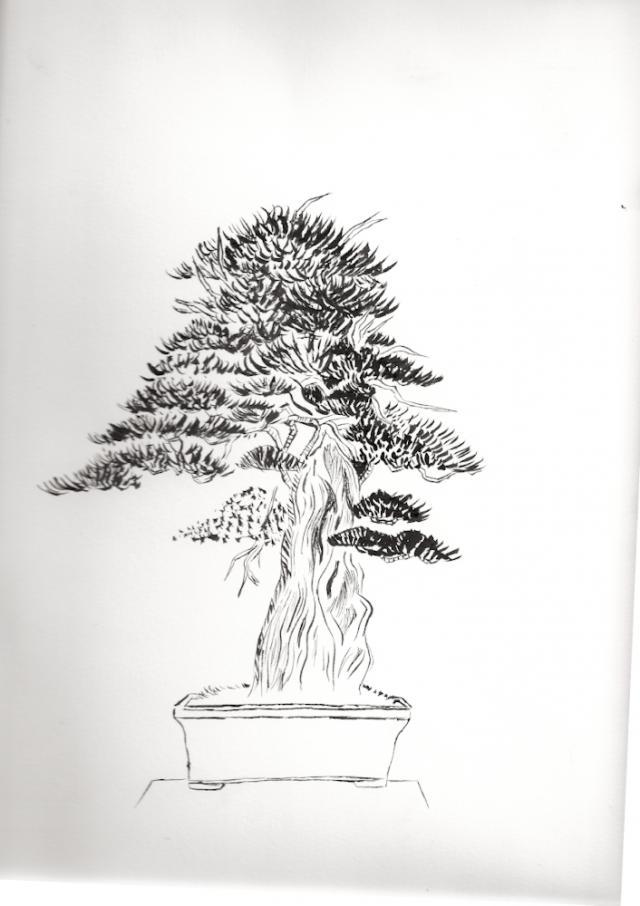 Naturellement bonsa dessins - Dessin bonzai ...