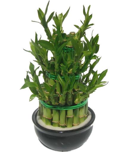 forum jardin au naturel bambou. Black Bedroom Furniture Sets. Home Design Ideas