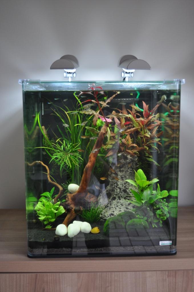 Hors ligne for Poisson aquarium 60l