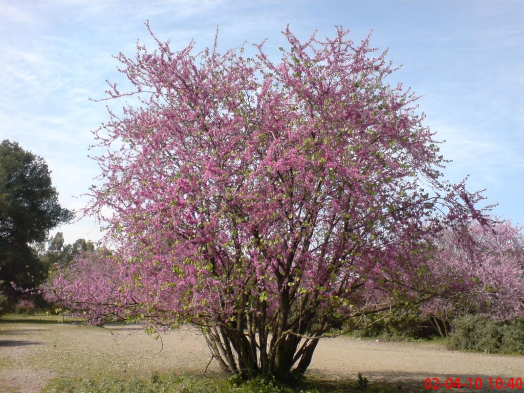 Plumes au vent l 39 arbre de jud e for De l arbre au meuble