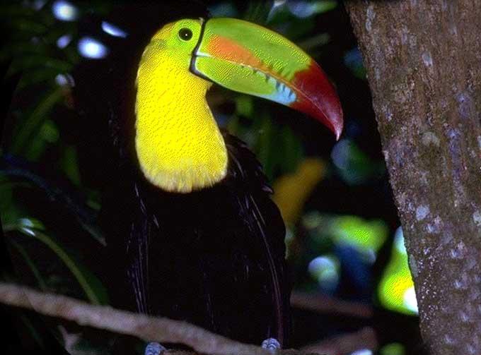 Passions et partage le toucan for Oiseau a long bec